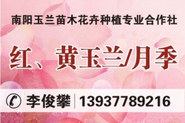 南阳玉兰苗木花卉种植专业合作社