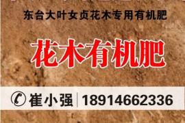 东台大叶女贞花木专用有机肥