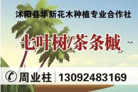 沭阳县华新花木种植专业合作社