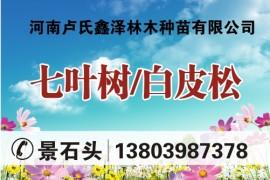 河南卢氏鑫泽林木种苗有限公司