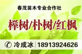 春茂苗木专业合作社