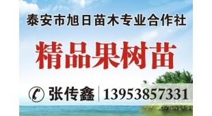 张传鑫——泰安市旭日苗木专业合作社