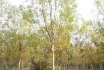 徐州沁馨园林绿化工程有限公司