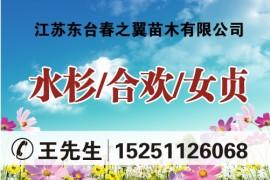 江苏东台春之翼苗木有限公司