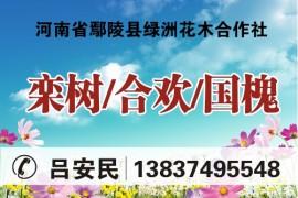 河南省鄢陵县绿洲花木基地