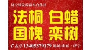 孟学——济宁市任城区绿发源苗木合作社