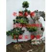 苏州别墅景观设计、苏州庭院施工、苏州景观绿化工程公司
