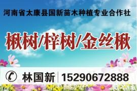 河南省太康县国新苗木种植专业合作社