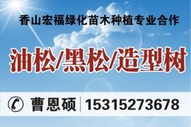 山东省莱芜市莱城区香山宏福绿化苗木种植专业合作社