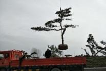 山东省莱芜市莱城区香山宏福绿化苗木种植专业合作社 (4)