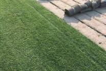 后园草坪种植场