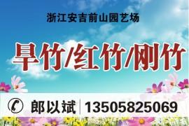 浙江安吉前山园艺场