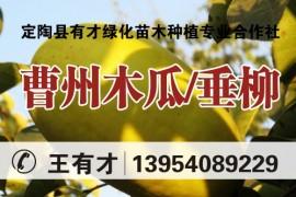定陶县有才绿化苗木种植专业合作社