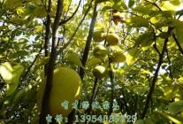 定陶县有才绿化苗木种植专业合作社 (14)