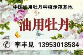 中国油用牡丹种植示范基地