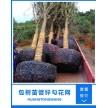 供应包树苗网 包树根铁丝网 铁丝网供应厂家