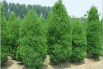 精品苗木供应 (9)
