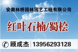 安徽林桥园林园艺工程有限公司