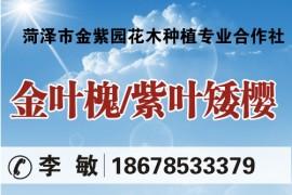 菏泽市金紫园花木种植专业合作社