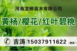 河南龙婷苗木有限公司