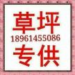 中华结蒌草坪,四季青草坪,高羊茅草坪18961455086