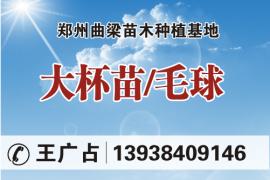 郑州曲梁苗木种植基地