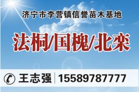 济宁市李营镇信誉苗木基地